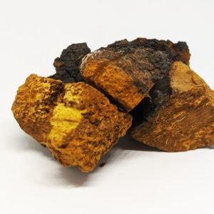 champignon chaga en morceaux 100 grammes