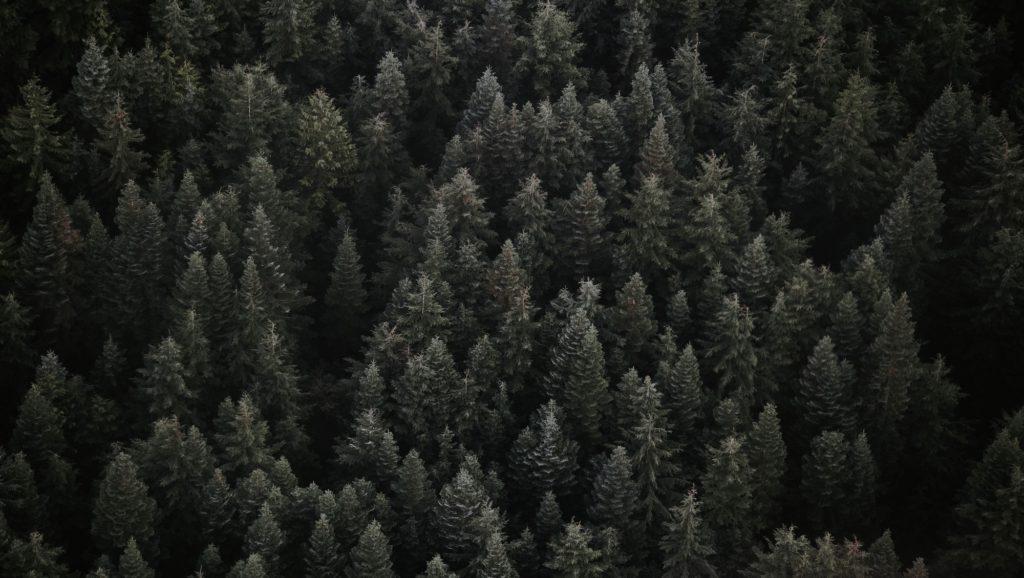 forêt épinette noire