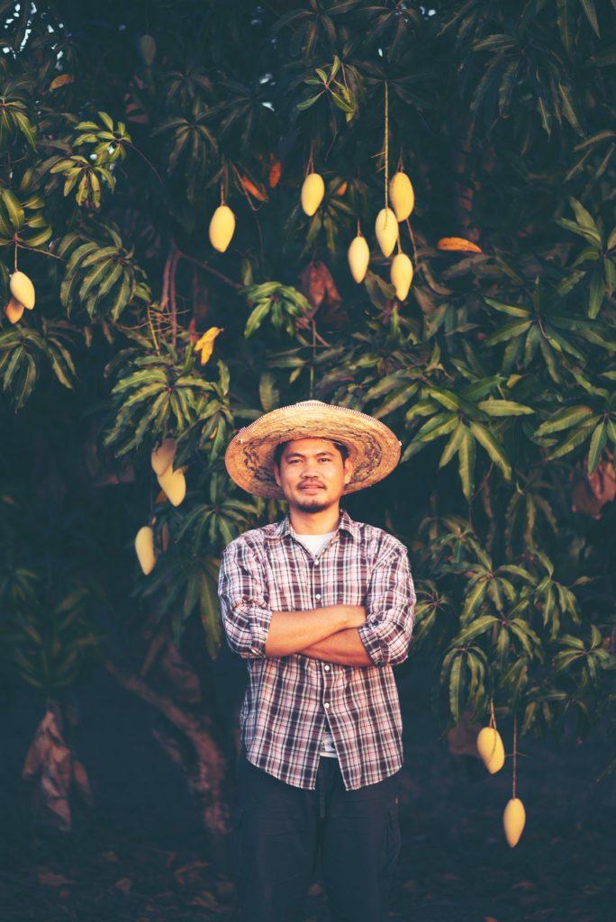 Le manguier et ses propriétés favorables pour la peau