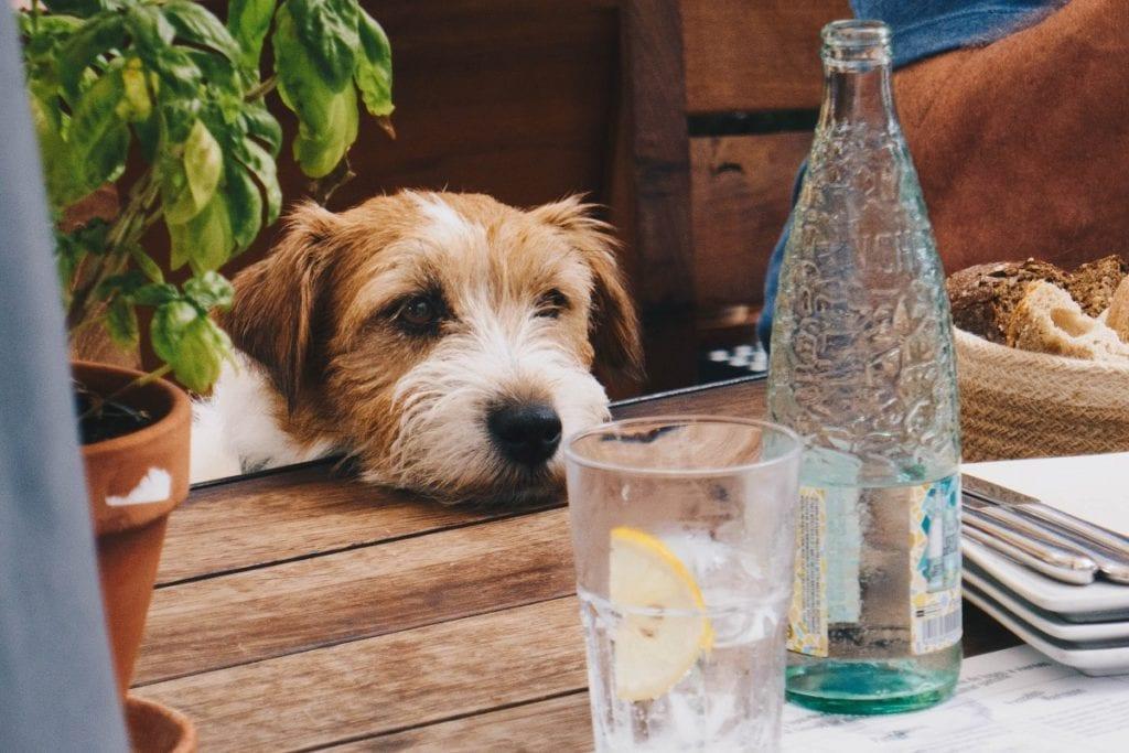 boire de l'eau contre les reflux