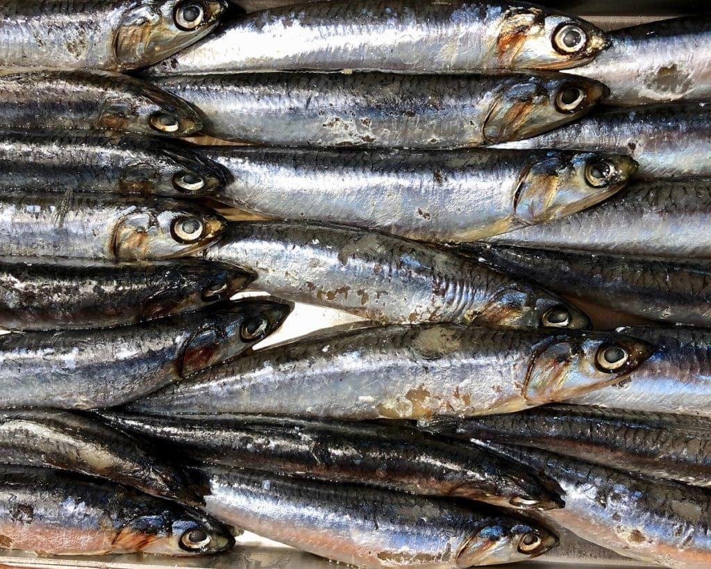 l'huile de poisson